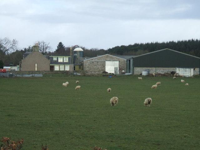 Den o'Howie, near Fetterangus