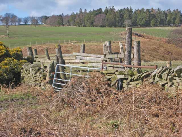 Wall and stockade
