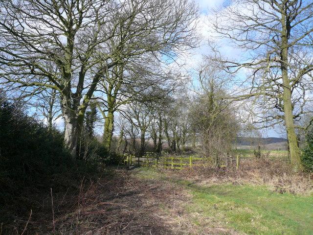 Footpath Intersection approaching Hardwick Wood