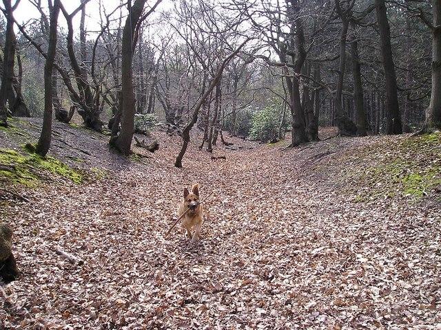 Faesten Dic, Joydens Wood