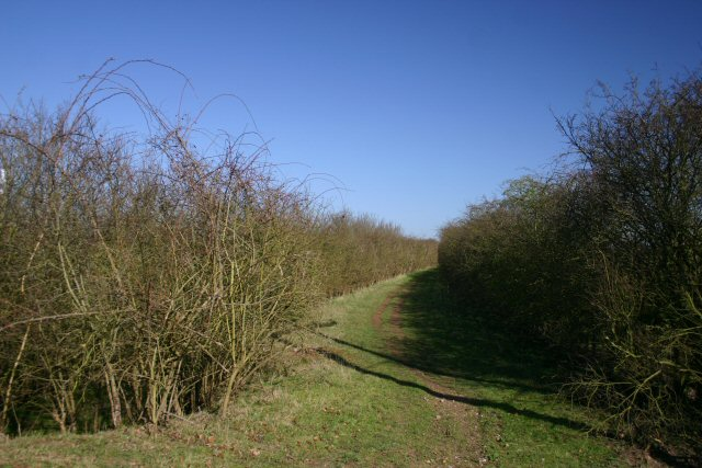Byway at Allington Hill