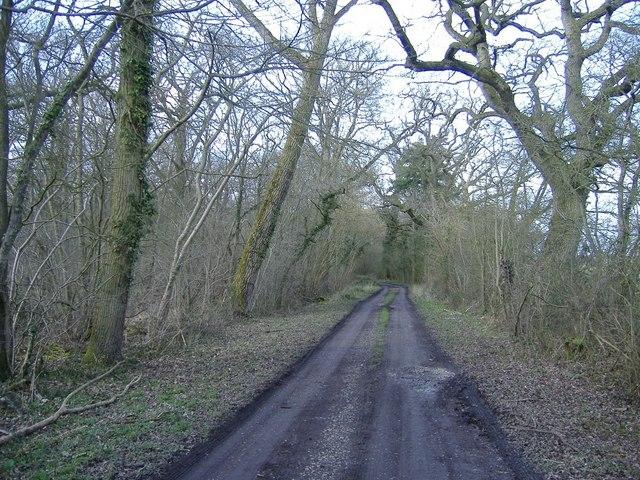 Battlelake wood