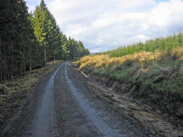 Forest road near Comb Hill