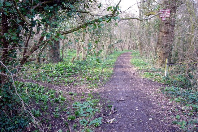 Bushy Coppice