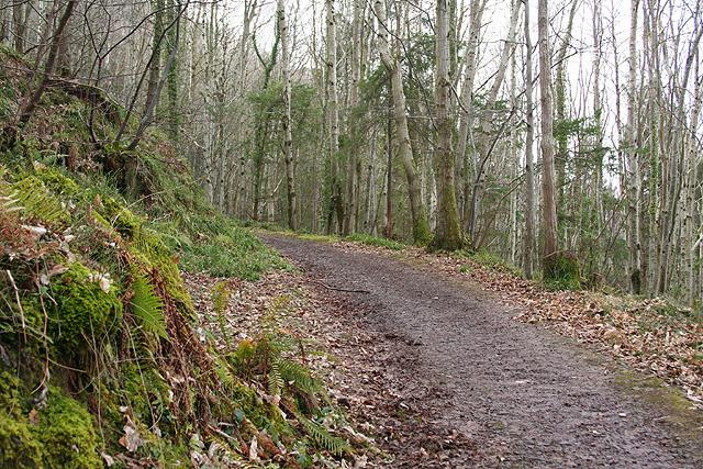Porlock: Yearnor Wood