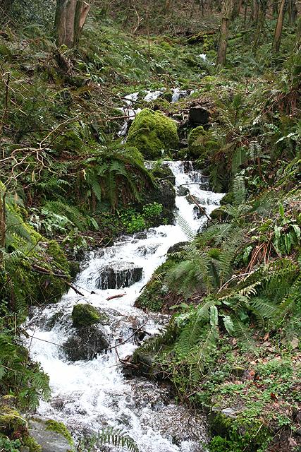 Porlock: stream in Culbone Combe