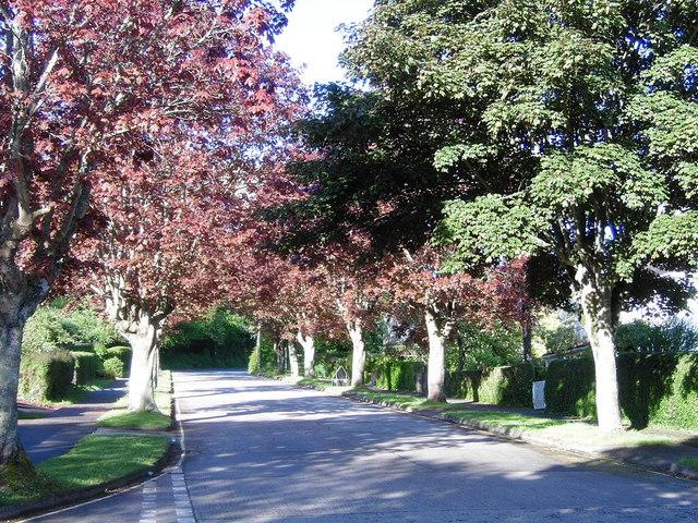 Maple Trees Lower Broadsands Road