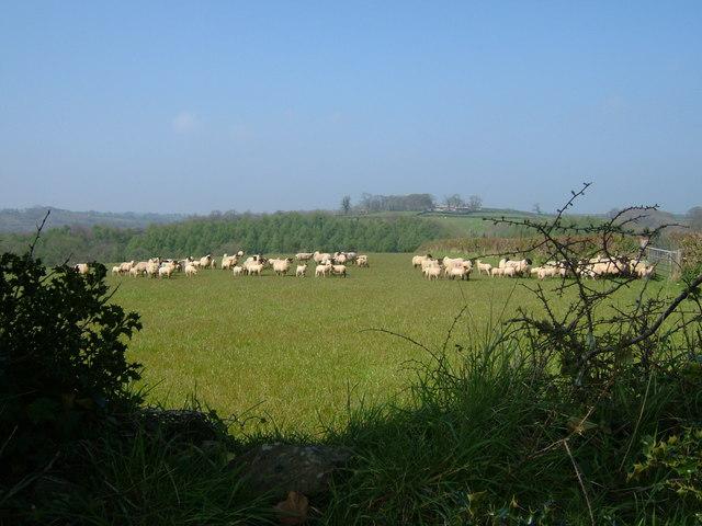 Farmland Towards Lashbrook