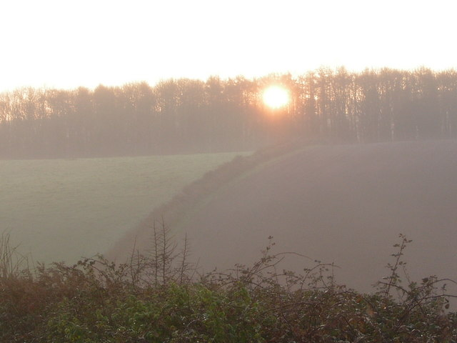 Sun rising through trees in Lupton Park