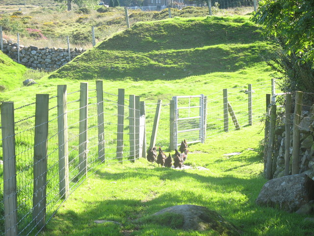 Free range hens on footpath