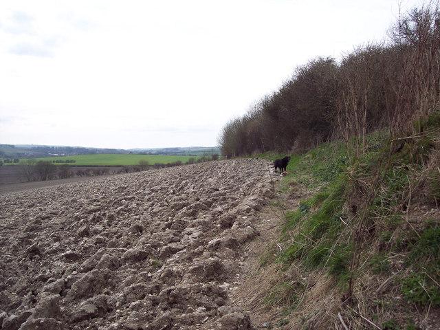 Field edge, Netton Farm, Bishopstone