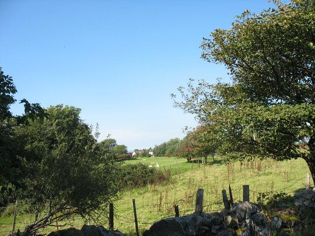 Fferm Bryngwyn Farm