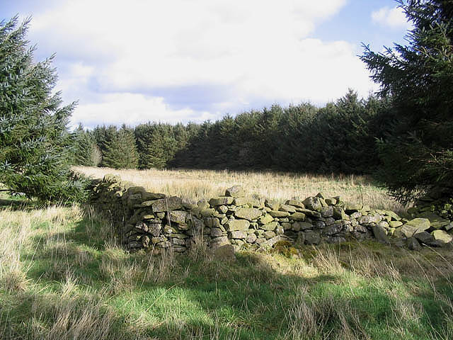 Muircleugh Stell