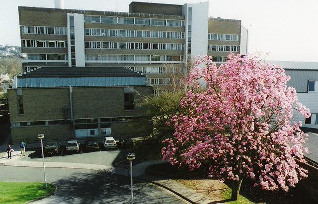 Magnolia Tree South Devon College
