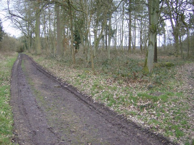Paths in Greathouse Wood