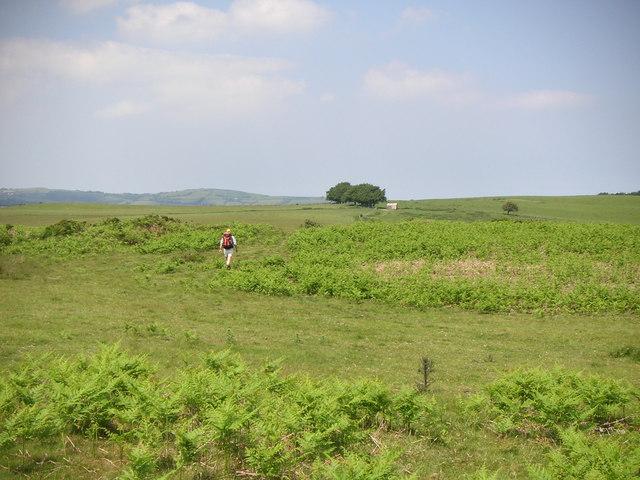 Moorland pastures