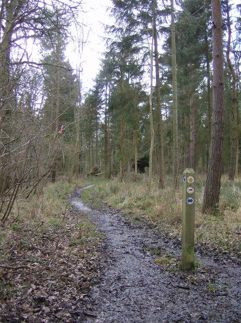 Path through The Gravels