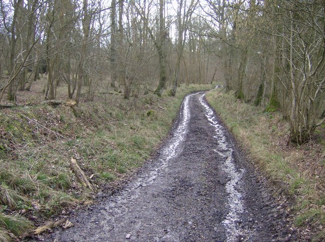 Bridleway towards Rushall Copse
