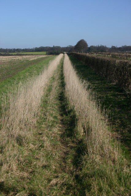 Field margin at Heath Road