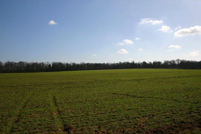 Farmland near the A11 / A14 intersection