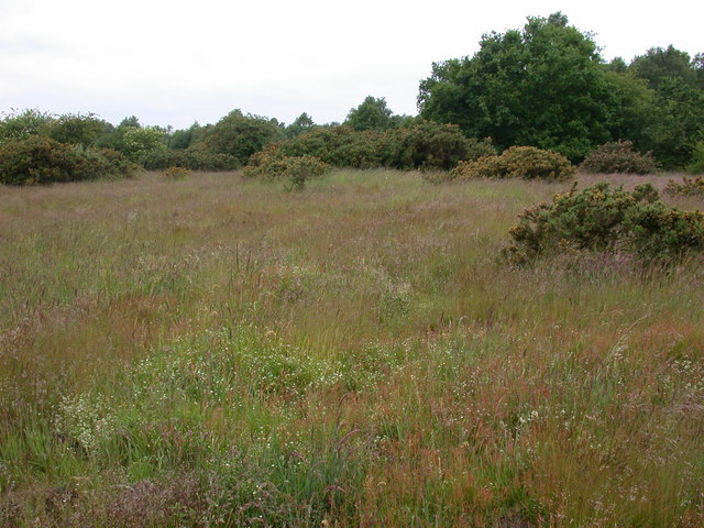 Heathland near Shakers Furze, Thompson, Norfolk