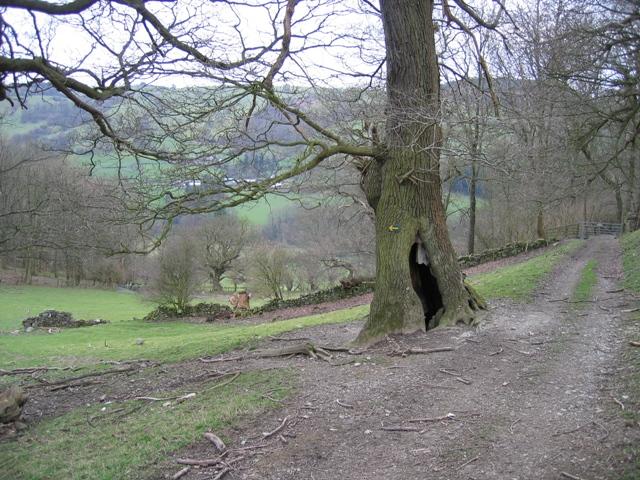 Offa's Dyke Path near Chirk Castle