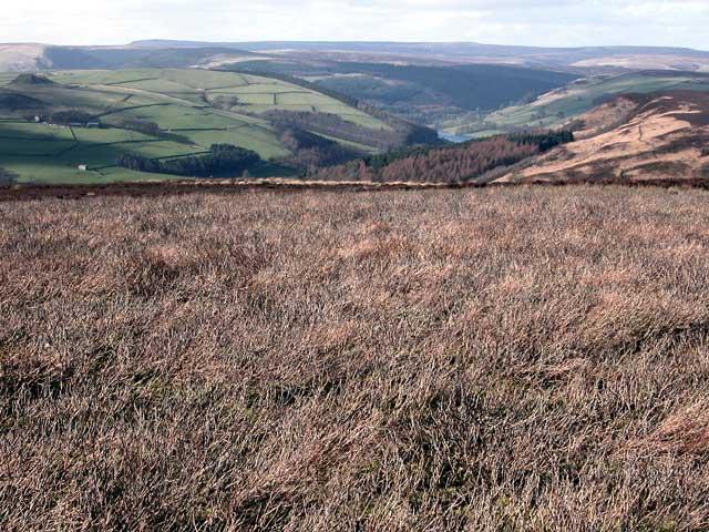 Burnt heather on Bamford Moor