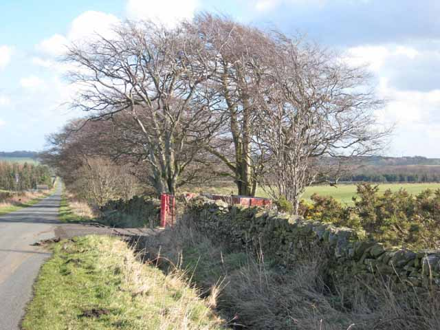 The road from Salter's Gate to Satley