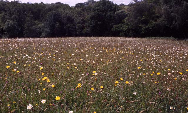 Hay meadow near Ashburnham Ford