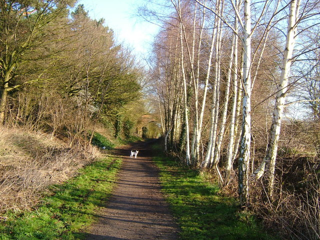 Bring back the birch