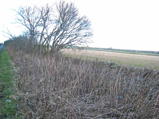 Verge on Longedge Lane