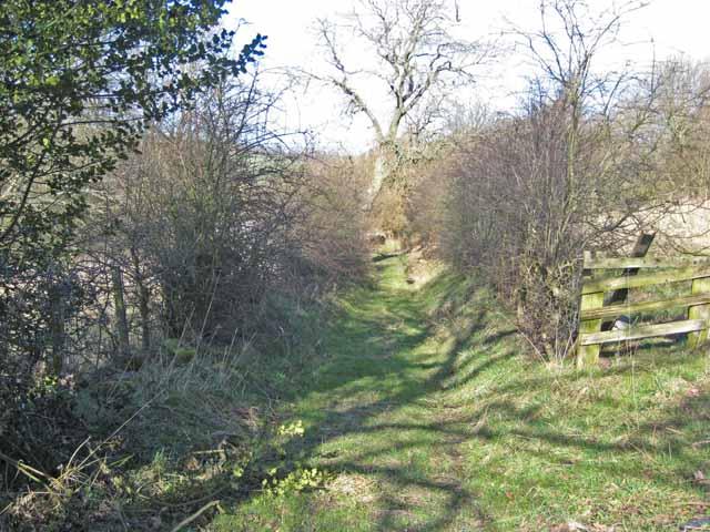 Green lane at Satley