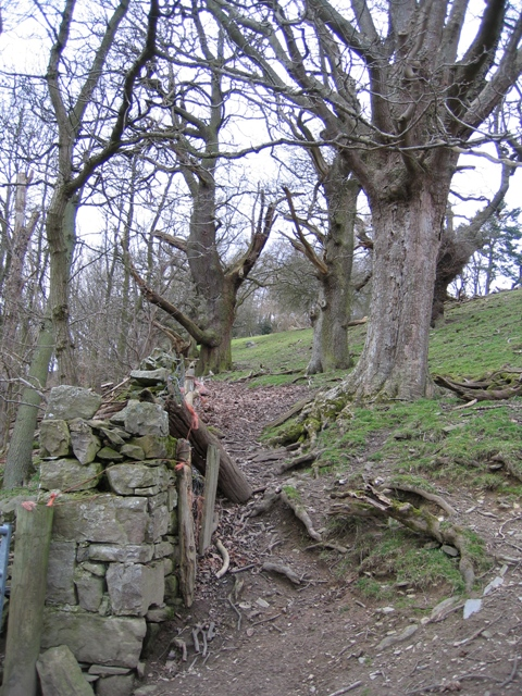 Woodland Boundary Wall near Warren Wood