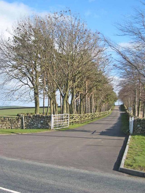 Agricultural diversification - the driveway to Hall Hill Farm