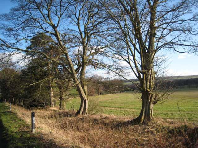 Trees on Broadwood Lane