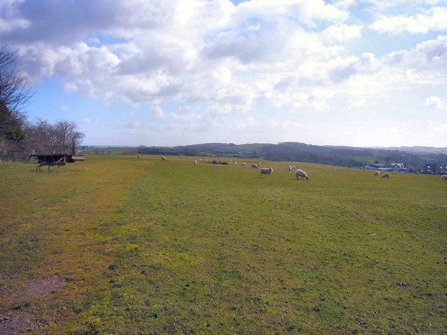 Field Eastwards To Pant-y-Pyllau