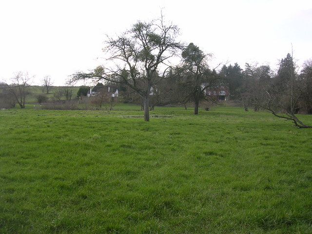 Neglected orchard