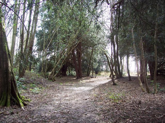 The Yew Tree Walk, Harewarren