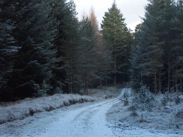 Track into the forest near Gallovie
