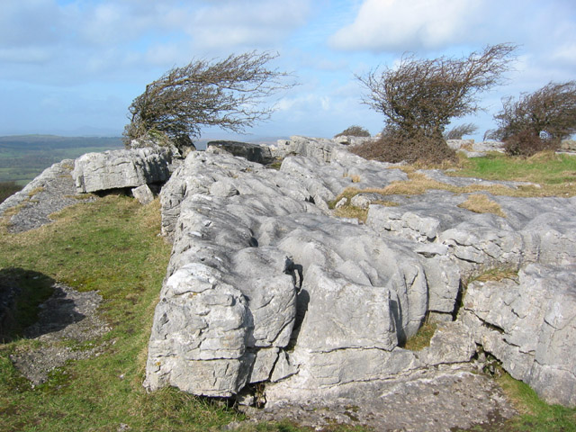 Limestone pavement and stunted trees