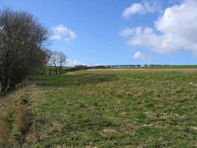 Holmdale Farm, Holm Field