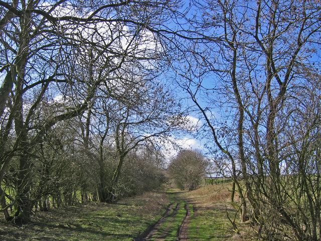Green Lane, Holm Field