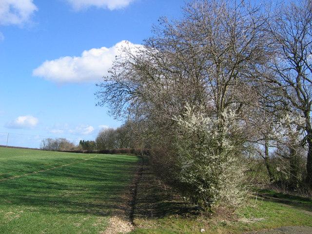 Holmfield Farmland