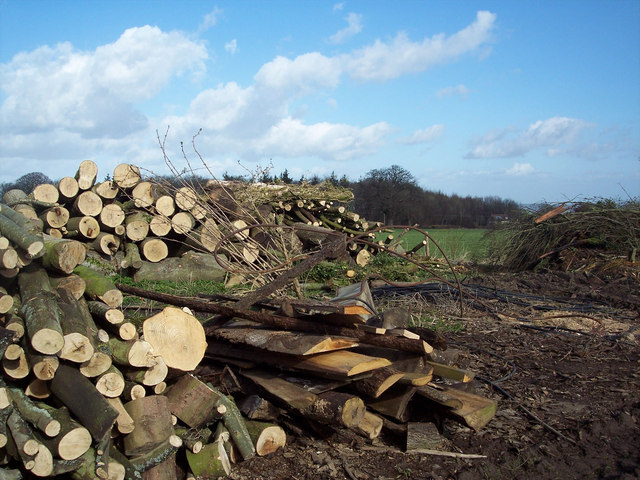 Log pile near Newtown