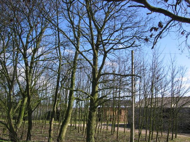 Holmfield Farm