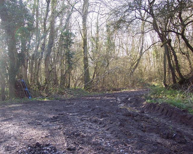 Track into Summerleaze Oaks near Kinghay