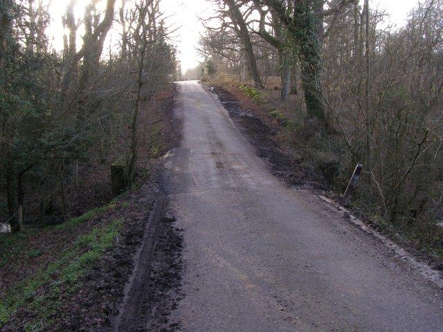 Road through Salternshill Wood, Beaulieu Estate