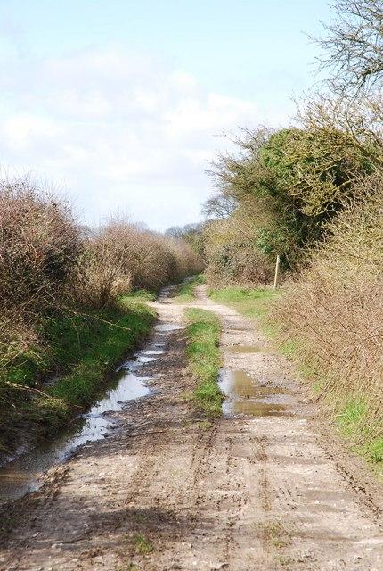 The Ox Drove across Croucheston Down