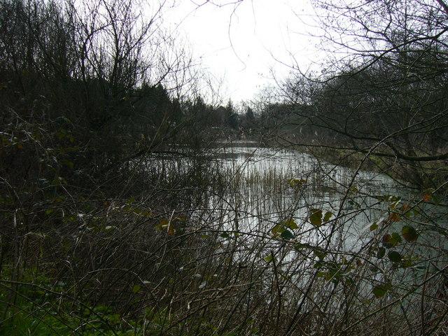 River Colne Hedingham Valley Walk