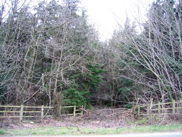 Woodland Entrance near the A5